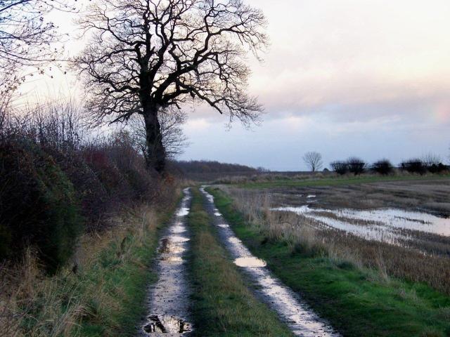 mud 12