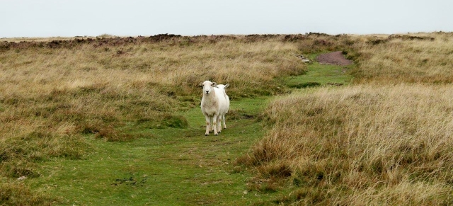 Did I mention that the sheep have six legs and two heads around here?