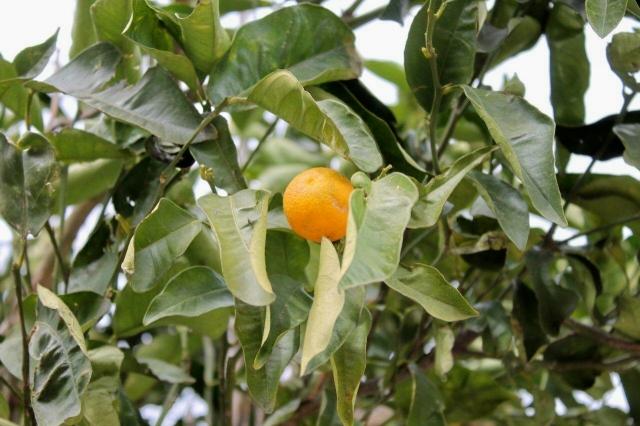 Guadalfeo 13