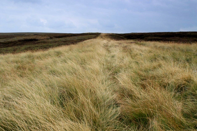 This might look like a band of grass in the heather but it???s actually an old colliery roadway. Old roads like this are not uncommon in the area