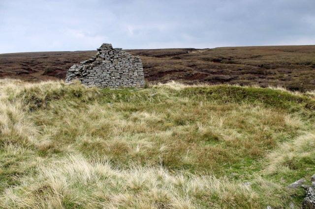 tan hill 9